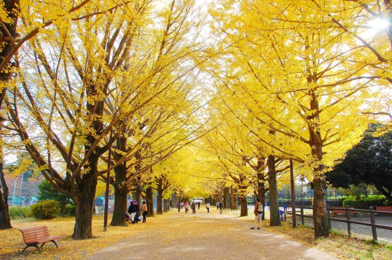 ウィンターハーフマラソン2021@国営昭和記念公園